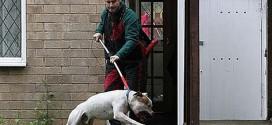 Хватање, уклањање паса са јавних површина