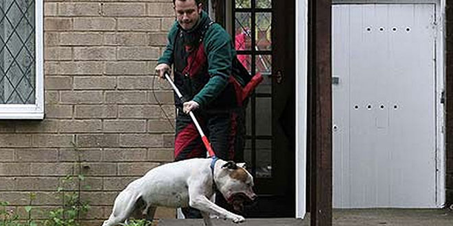 Uklanjanje pasa sa javnih površina