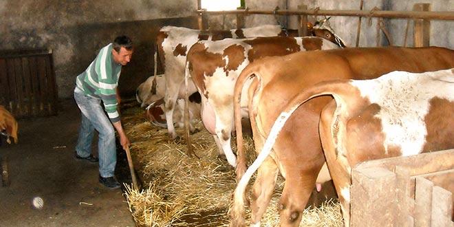 POMOĆ OD FAO: 79 tona stočne hrane